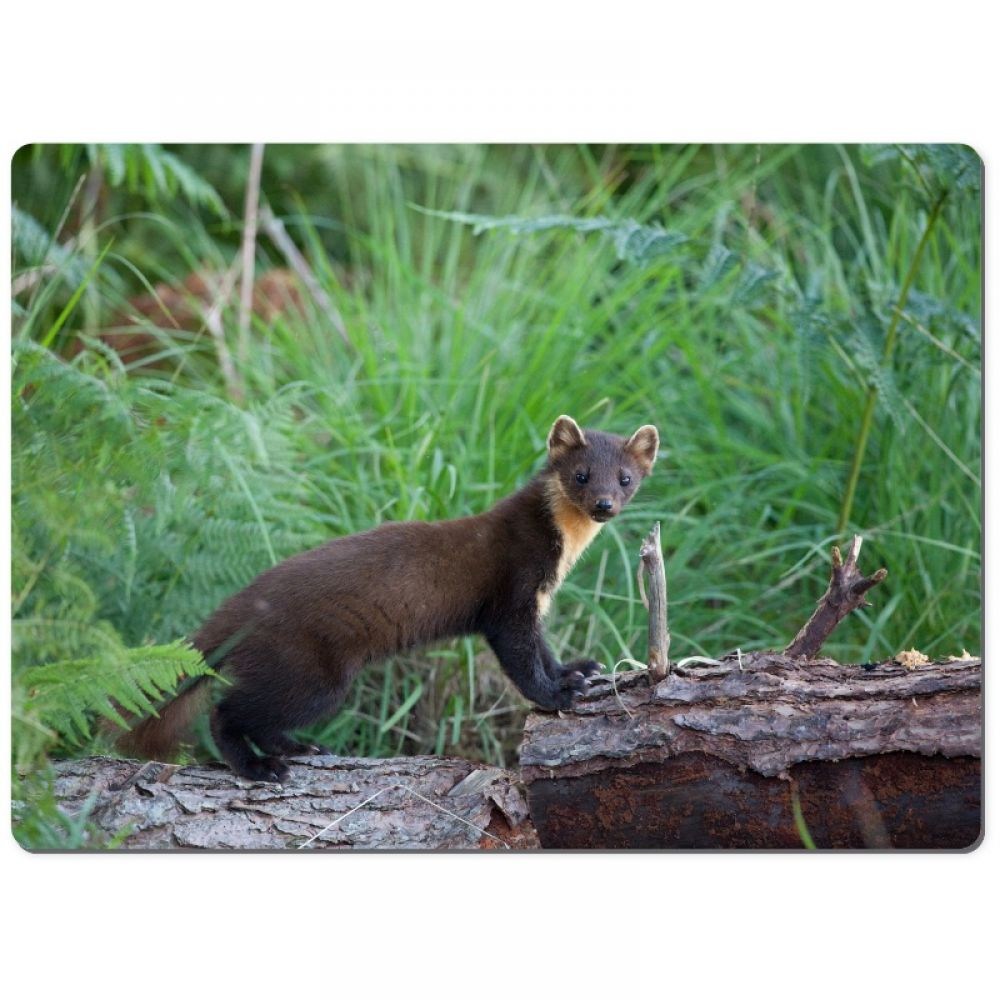 Pine marten 3 chopping board.jpg